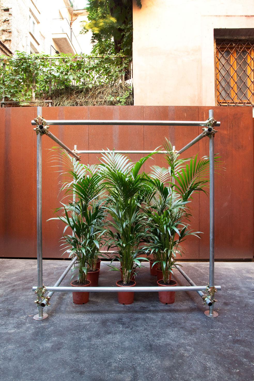 Grove in Scaffolding, 2015, ferro, piante, 180x180x180 cm