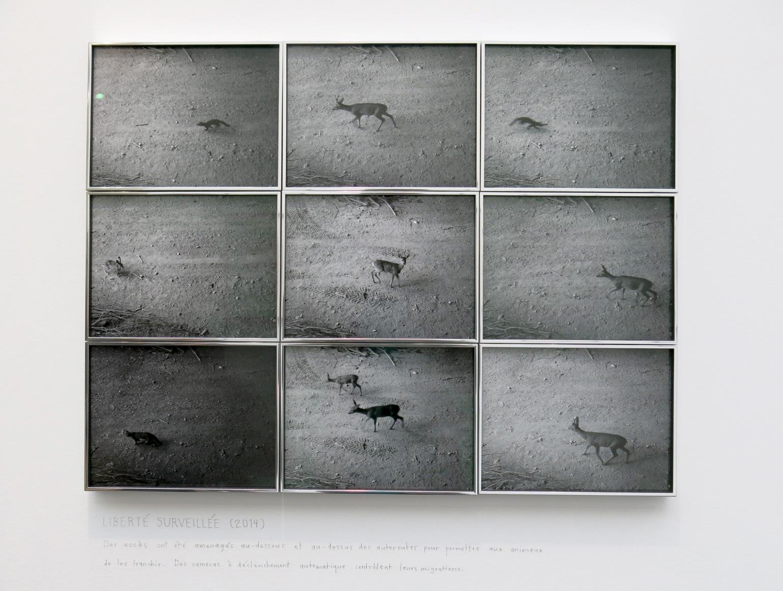 7 Sophie Calle Sfeir, Semler Gallery